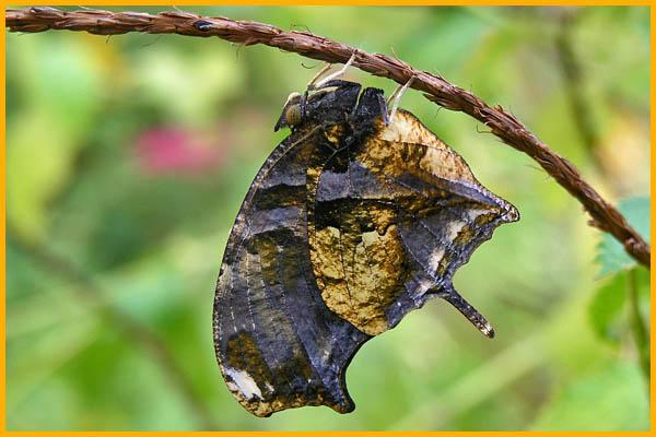 La casa delle farfalle universit di catania - Colorazione dei bruchi ...